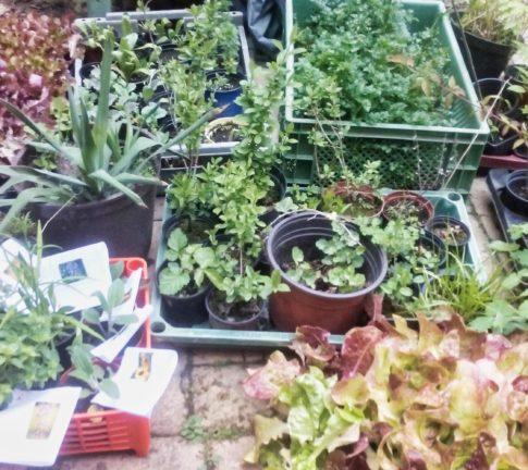 Pflanzentauschbörse Taucha